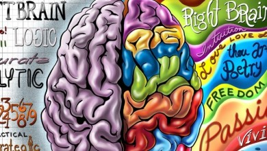 Left Brain Right Brain Wallpaper