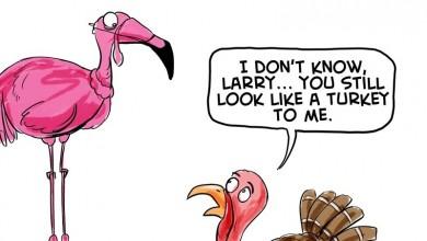 thanksgiving 2012 cartoon turkey flamingo ❤ cartoon