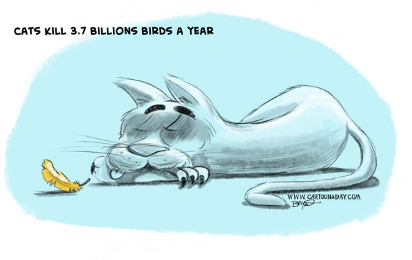 cats-kill-3-7-billion-birds