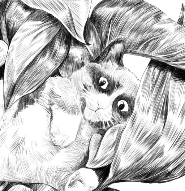 luna-tuna-cat-sketch-closeup
