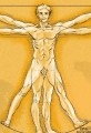 Vitruvian Man cartoon