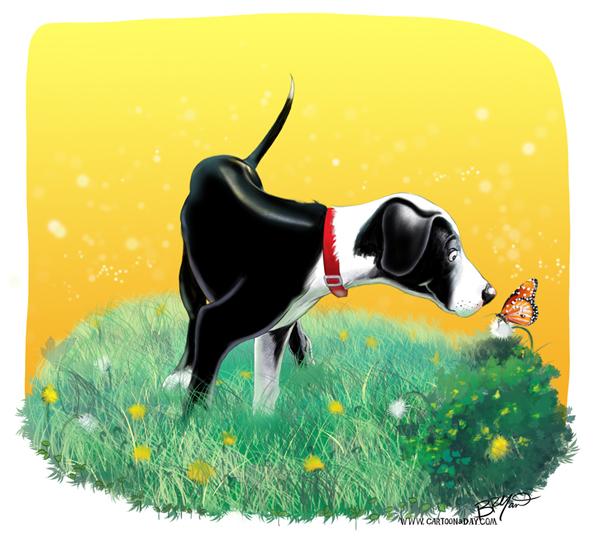 border-collie-cartoon-badger-598