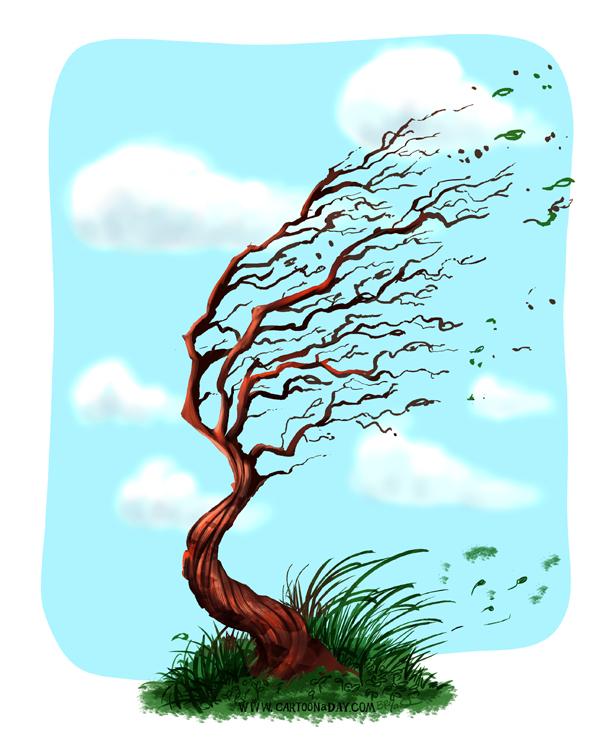 marker-trees-blue-sky-windy-598