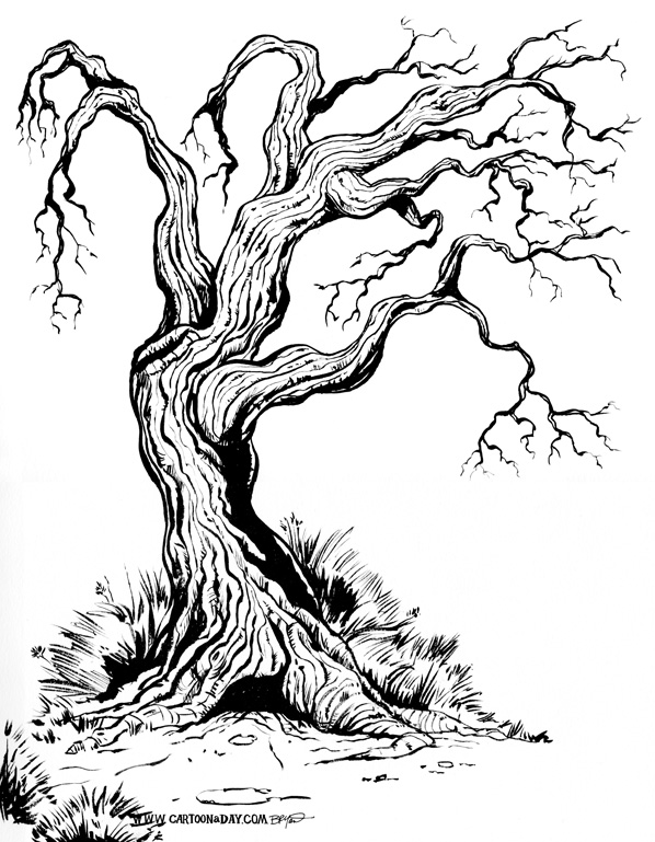 old-gnarly-tree-sketch-598