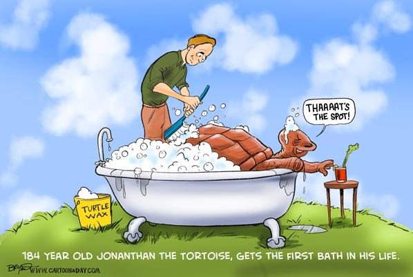 jonathan-tortoise-cartoon-598