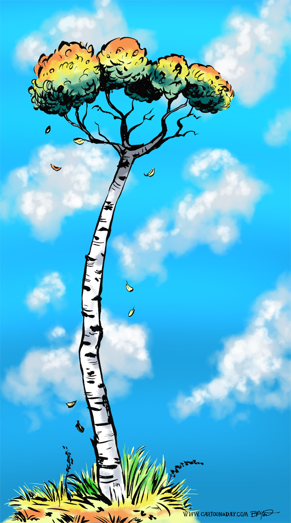 twiggy-tree-birch-598