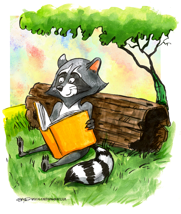 raccoon-reading-book-598
