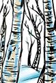 Twiggy Tree Birch Forest