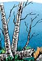 Twiggy Birch Tree Glade