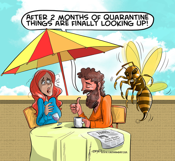 giant-murder-hornet-cartoon-598