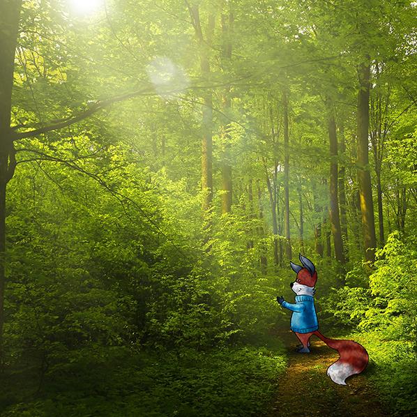 kit-fox-forest-path-598